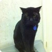 Adopt A Pet :: Bogey - St. James City, FL