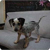 Adopt A Pet :: Lillie-Belle - Phoenix, AZ