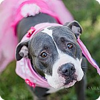 Adopt A Pet :: Mystic - Reisterstown, MD