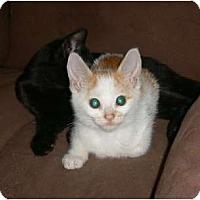 Adopt A Pet :: Sammy - lake elsinore, CA