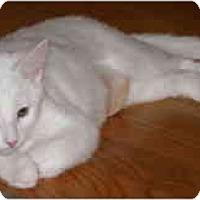 Adopt A Pet :: Lilly - Davis, CA