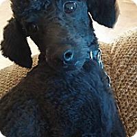 Adopt A Pet :: Nelly - Golden Valley, AZ