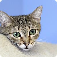 Adopt A Pet :: Moen - Chicago, IL