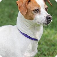 Adopt A Pet :: Dorothy - Conyers, GA