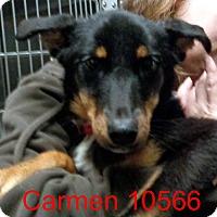 Adopt A Pet :: Carmen - Greencastle, NC
