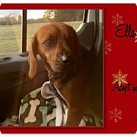 Adopt A Pet :: ELLA - Ventnor City, NJ