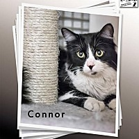 Adopt A Pet :: Connor - Albuquerque, NM