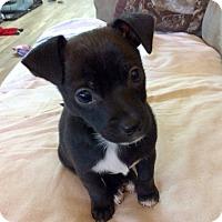 Adopt A Pet :: Ace - Hialeah, FL