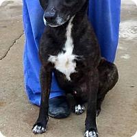Adopt A Pet :: Rheuben - New Oxford, PA