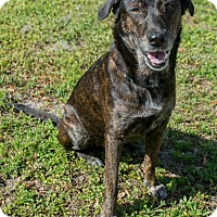 Adopt A Pet :: Jewel - Tampa, FL