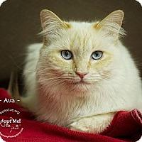 Adopt A Pet :: Ava - Phoenix, AZ