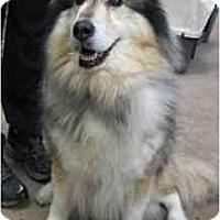 Adopt A Pet :: River - Madison, WI