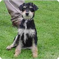 Adopt A Pet :: Mandi - Albuquerque, NM