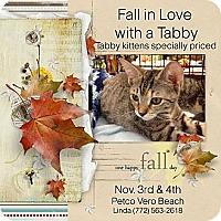Adopt A Pet :: Tabby adoption event - Vero Beach, FL