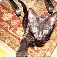Adopt A Pet :: Minnie - Cuyahoga Falls, OH