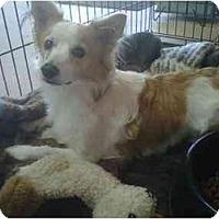 Adopt A Pet :: Groovy - Gilbert, AZ
