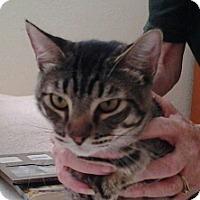 Adopt A Pet :: Ben - Modesto, CA