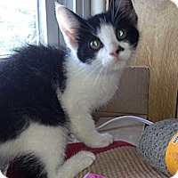 Adopt A Pet :: June - Troy, OH