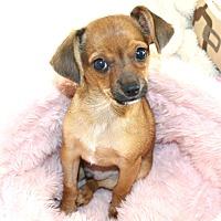 Adopt A Pet :: Calvin- Watch my Video! - Temecula, CA