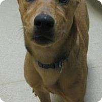 Adopt A Pet :: Star - Gary, IN