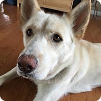 Adopt A Pet :: Ben - Manhasset, NY