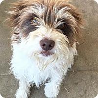 Adopt A Pet :: Sprout - Van Nuys, CA