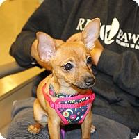 Adopt A Pet :: Willow - Yuba City, CA