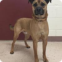Shepherd (Unknown Type) Mix Dog for adoption in McDonough, Georgia - Jigsaw