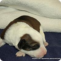 Adopt A Pet :: 10 Easter babies M&F's - Waterbury, CT