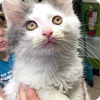 Adopt A Pet :: Caspian - Joplin, MO