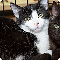 Adopt A Pet :: Ada - Irvine, CA