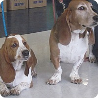 Adopt A Pet :: Elvis - Barrington, IL