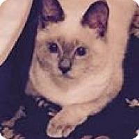 Adopt A Pet :: Chloe - Harriman, NY