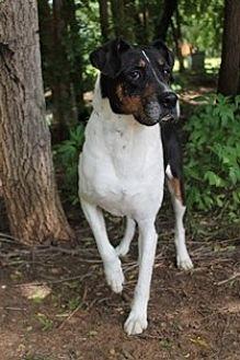 Boxer/Border Collie Mix Dog for adoption in Yukon, Oklahoma - Ringo