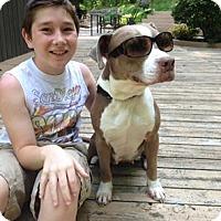 Adopt A Pet :: AVA - Kimberton, PA
