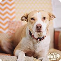 Adopt A Pet :: Hunny - Portland, OR