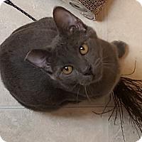 Adopt A Pet :: Lucy-Goosey - Pasadena, CA