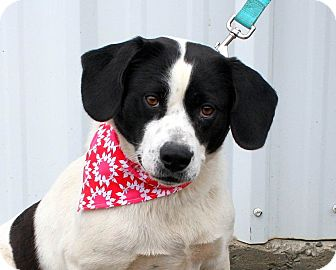 Hound (Unknown Type) Mix Dog for adoption in Manchester, Connecticut - Precious in CT