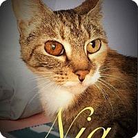 Adopt A Pet :: Nia - Garner, NC