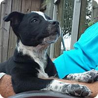 Adopt A Pet :: Dallas - Orange Lake, FL