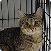 Adopt A Pet :: Atlantis - Pottsville, PA