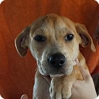 Adopt A Pet :: Lottie - Oviedo, FL