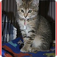 Adopt A Pet :: Dolly - New Richmond,, WI