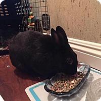 Adopt A Pet :: Blackberry - Los Angeles, CA