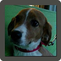 Adopt A Pet :: Hank Holly *MEET ME!* - Wakefield, RI