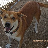 Adopt A Pet :: Cisco - Littlerock, CA