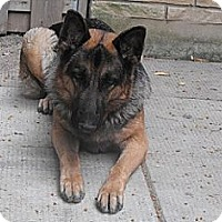 Adopt A Pet :: Tika - Hamilton, ON