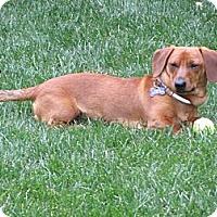 Adopt A Pet :: Jasper - San Jose, CA
