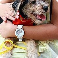 Adopt A Pet :: Bobbie - Temple City, CA