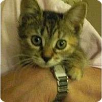 Adopt A Pet :: Lindsey - Reston, VA